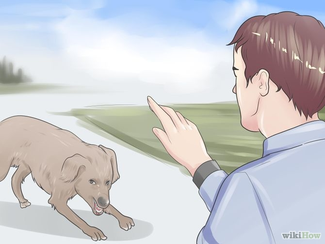 How to protect yourself in a dog attack